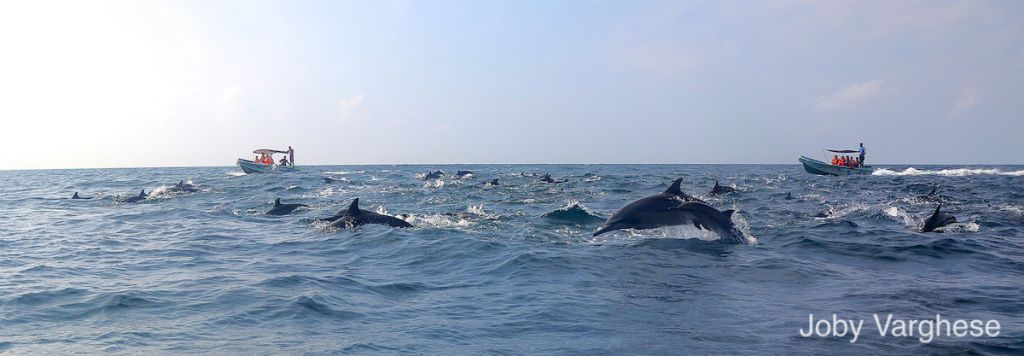 Dolphins and Whales watching
