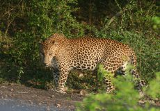 Visit Wilpathu National Park