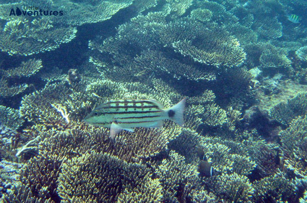 Diving – Snorkeling