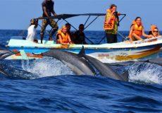 Observation des dauphins et baleines 2
