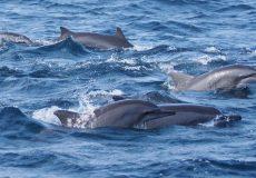 excursions en mer pour voir les dauphins
