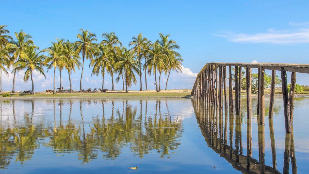 Kalpitiya mangrove
