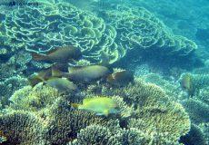Scuba diving & snorkelling